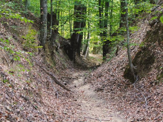 Natchez Trace National Scenic Trail Yockanookany Segment